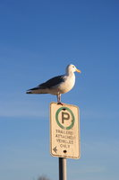 070127154453_view--parking_seagull