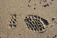 070127154755_view--footstep_on_the_sands