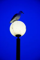view--seagull resting on the light
