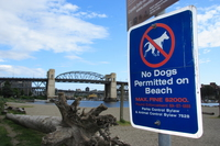 no dog permitted on beach