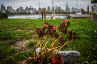 Jericho Beach remeber flowers Abbotsdord, British Columbia, Canada, North America