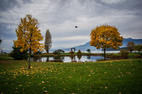 Jericho Beach autumn meadow Abbotsdord, British Columbia, Canada, North America