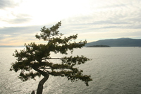 a single tree overlooking vancouver coast