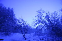 purple winter land