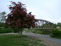 iron bridge and black raven