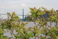 lion gate bridge in spring