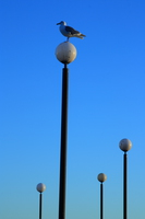 seagull and lamp posts