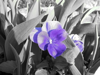 080330181051_purple_flower