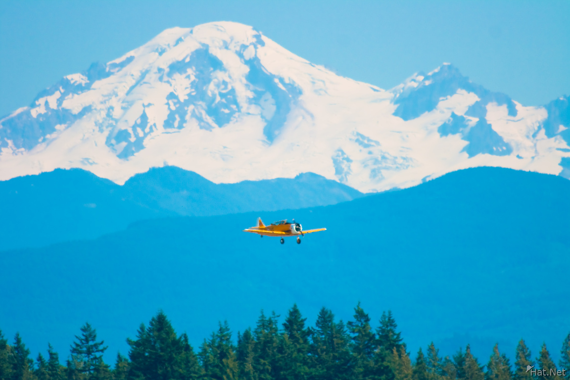 mount baker and yellow havards