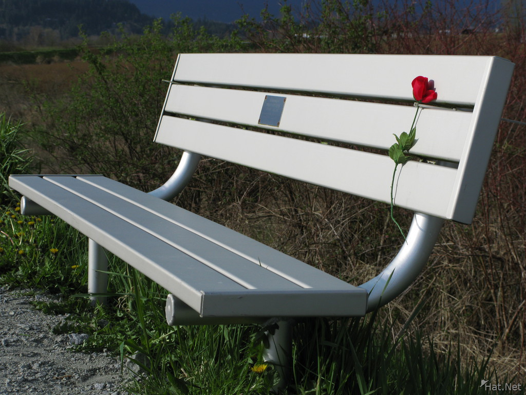 red rose and bench