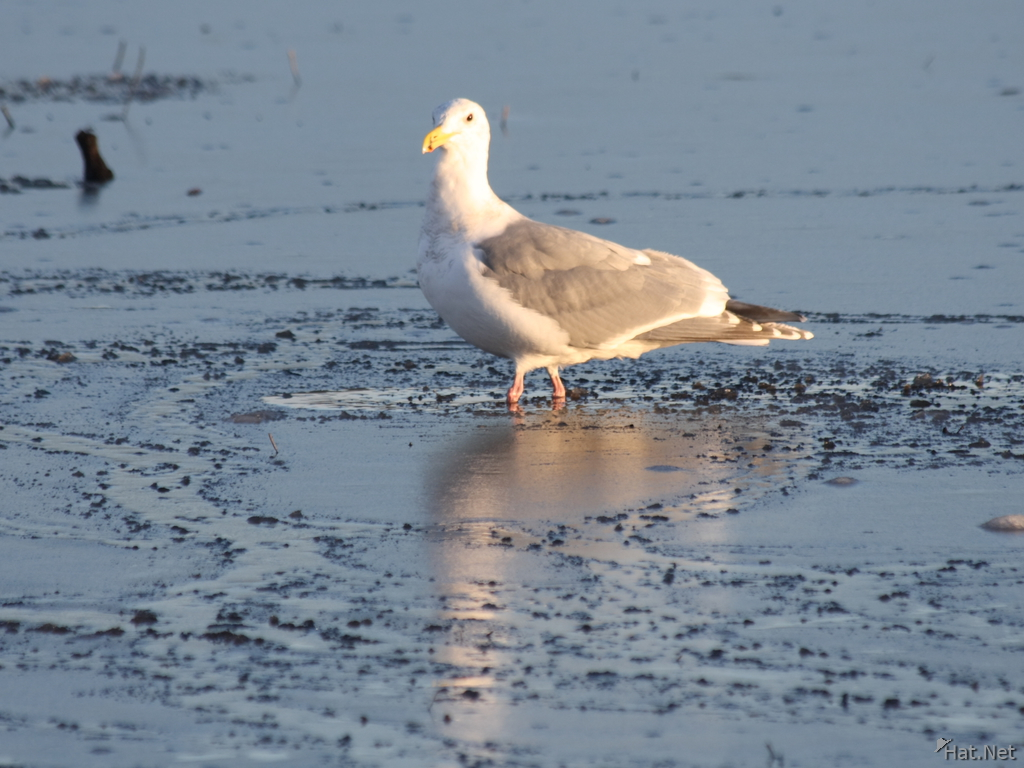 seagull in ice lake