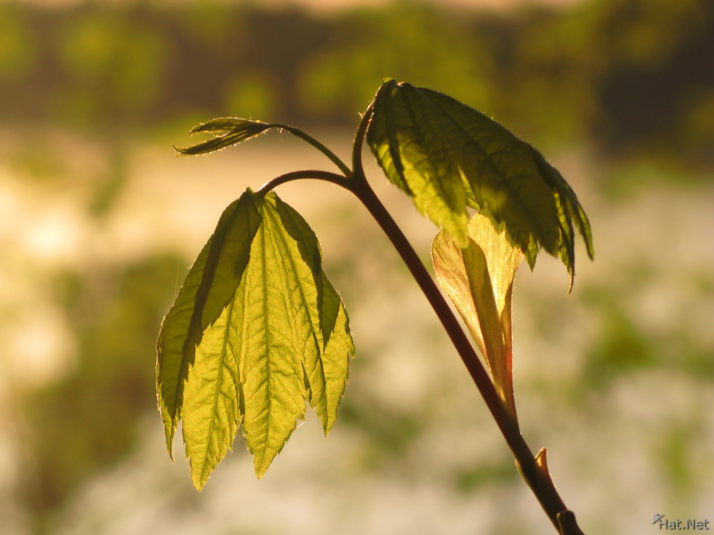 backlighted leaves