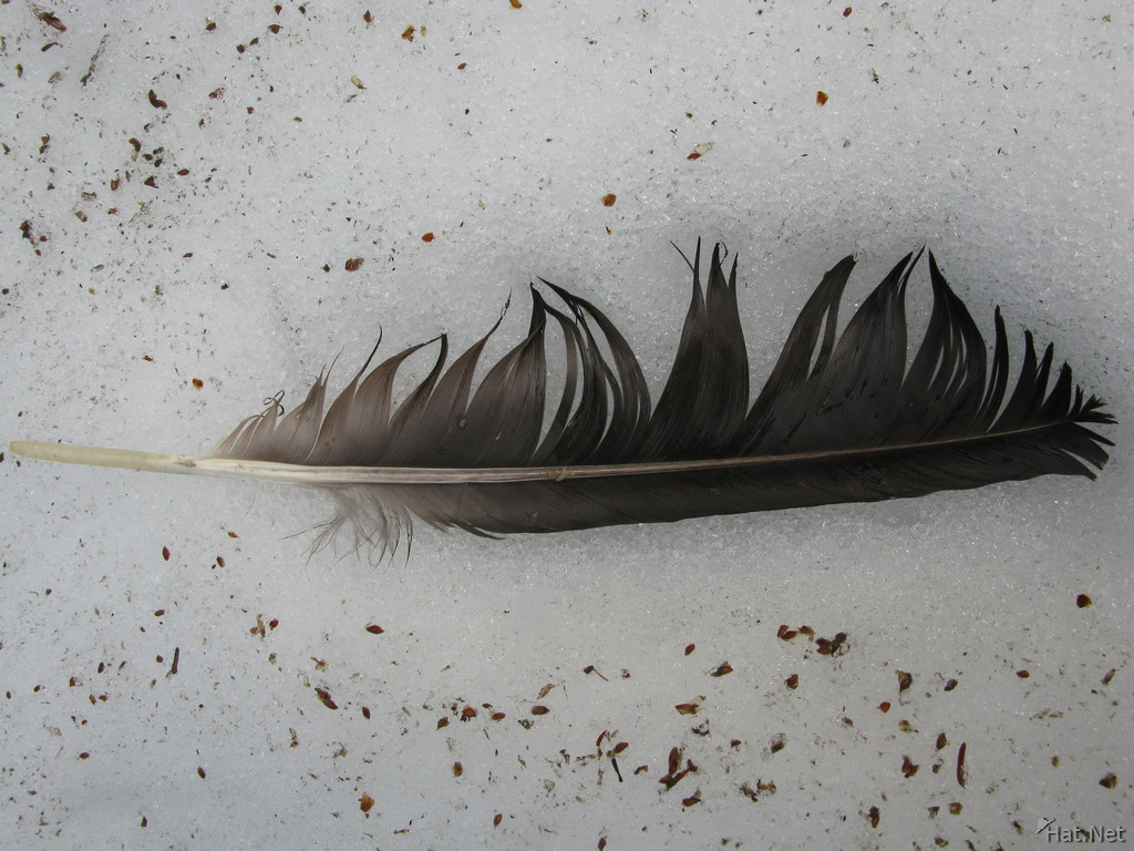 feather of an eagle