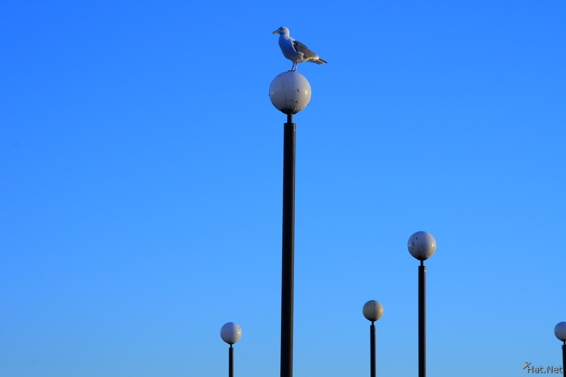 view--seagull and lamp posts