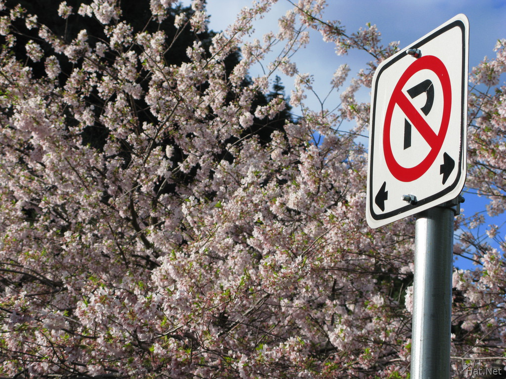 no parking in front of cherry blossom tree
